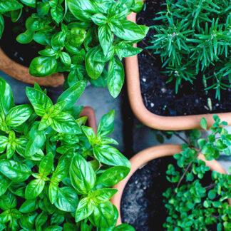Herb & Salad Grow Kits